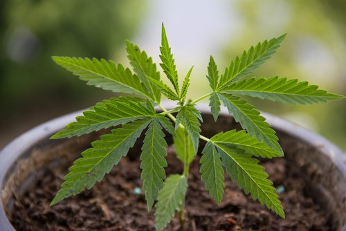 Cannabinoids Have Potential to Treat Skin Conditions Like Psoriasis, Review Shows
